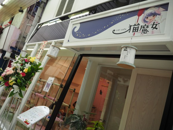 """8月12日オープン!福井駅前にできた猫カフェ""""猫魔女""""にいってきました。"""