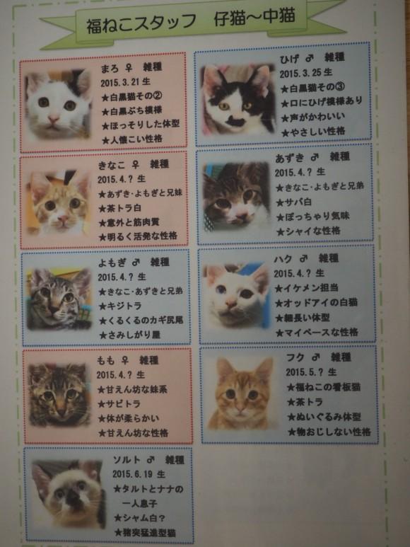 福ねこ 猫紹介
