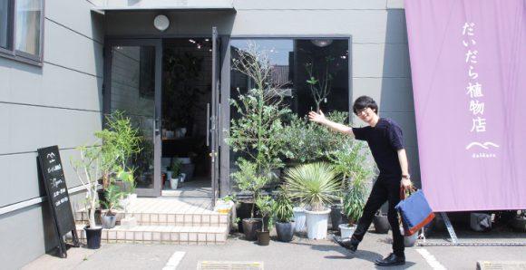 インテリアにいかが?観葉植物を中心とした植物店|だいだら植物店