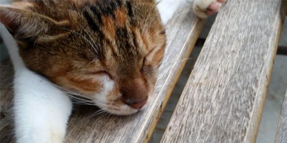 猫顔アップ2