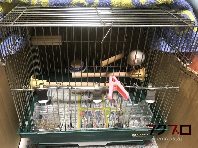 文鳥の飼育環境