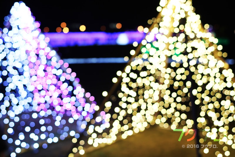 金ケ崎緑地 敦賀港「ミライエ」 イルミネーション点灯前(20)